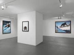 Installation view, Walton Ford,New Watercolors, Vito Schnabel Gallery, St. Moritz
