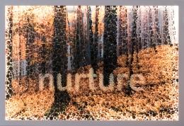 Nurture (Photo Dot Objects)