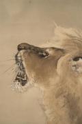 Roaring standing male lion