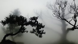 WU CHI-TSUNG, Landscape In The Mist 001, 2012