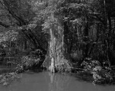 Swamp, 2019 gelatin silver print