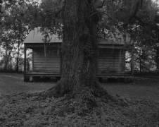 Tree and Cabin, 2019