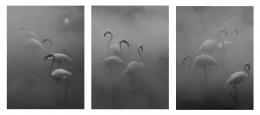 Flamingo Triptych, Zimbabwe 2020