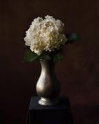 Hydrangea in Vase, 2007, 36-1/2 x 30-1/4 Color Archival Pigment Print, Ed. 10
