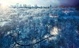 Central Park Snow, NYC, 2010, C-Type Print