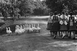 Hungary, (Gaggle of Geese, Group of Girls), 1964, 16 x 20 Silver Gelatin Photograph