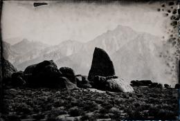 Lone Pine, Unique Collodion Wet Plate: SOLD