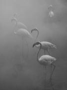 Flamingos I, Zimbabwe, 2020