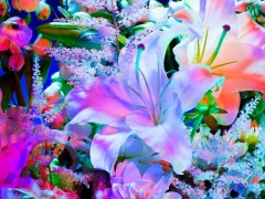 Electric Blossom #1123, 2012