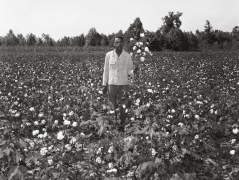 Portrait in a Cotton Field, n.d., Archival Pigment Print