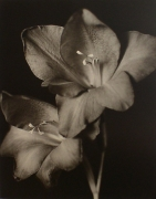 """""""Two Glads"""", 1998 (TB# 588), 24 x 20 Toned Silver Gelatin Photograph, Ed. 25"""