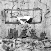 Five Hands, 2006, Silver Gelatin Photograph