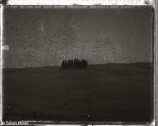 Les Cypres, 2000, 15-3/4 x 19-1/2 Toned Silver Gelatin Photograh, Ed. 20