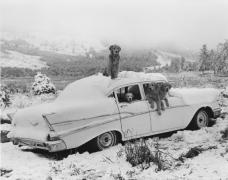 """""""The Gang,"""" Freak Snowstorm, August, Montana, Little Bear Ranch, 1992, Silver Gelatin Photograph"""