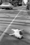 Dead Cat, 1970, Silver Gelatin Photograph