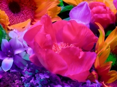 Electric Blossom #551, 2012