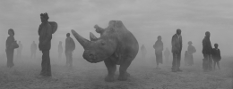Najin and people in fog, Kenya, 2020