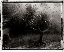 Le Yuca, 1988, 15-3/4 x 19-1/2 Toned Silver Gelatin Photograh, Ed. 20