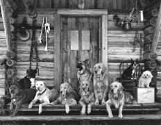 The Gang at Little Bear Ranch, McLeod, Montana, 1995 (09589-18-7), Silver Gelatin Photograph