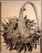 """Dried Sunflower "", 1995 (TB 457), 24 x 20 Toned Silver Gelatin Photograph, Ed. 25"
