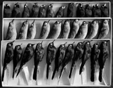 La Coleccionista, 11 x 14 Silver Gelatin Photograph