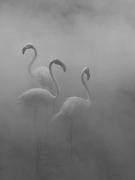 Flamingos II, Zimbabwe, 2020
