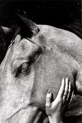 Untitled (Horse and Hand), 1972, 14 x 11 Silver Gelatin Photograph, Ed. 25