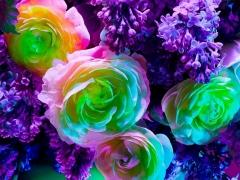 Electric Blossom #562, 2012