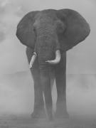 Bupa, Kenya, 2020