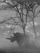 Fatu under Tree, Kenya, 2020