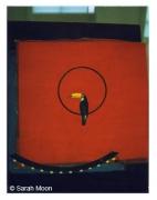 Le Toucan, 1998, 29-1/8 x 22-1/2 Color Carbon Photograph, Ed. 15