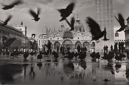 Pigeons on the Piazza St. Marco, Venice, 1949, 7-11/16 x 11-11/16 Vintage Silver Gelatin Photograph