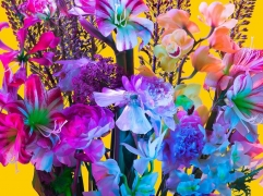 Electric Blossom #512, 2012, 18 X 23 inches, Archival Pigment Print, Edition of 10