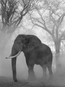 Mak in Trees, Zimbabwe, 2020
