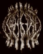 Anamorphosis, Untitled #0804976, 2008, Silver Gelatin Photograph, Ed. 7