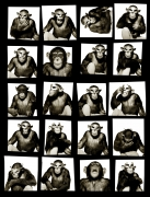 Monkey with Mask (Contact), New York City, 1994, Archival Pigment Print