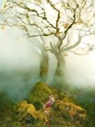 Tree, Fairy Glen, Isle of Skye, Scotland, 2013, Archival Pigment Print