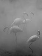Flamingos III, Zimbabwe, 2020