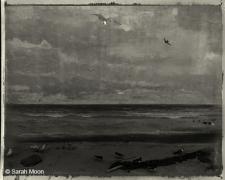 Les Oiseaux de Stockholm, 2011, 15-3/4 x 19-1/2 Toned Silver Gelatin Photograh, Ed. 20