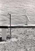 Florida Keys (Long Spigot and Bird), 1968, 20 x 16 Silver Gelatin Photograph