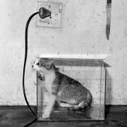 Cat in Fish Tank, 2000, Silver Gelatin Photograph