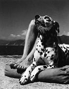 Dalmation, Portofino, 1937, 11 x 14 Silver Gelatin Photograph