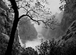 Victoria Falls with Tree, 2008, 16 x 20 inches, Silver Gelatin Photograph