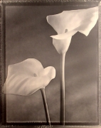 """Solarized Callas "", 1998 (TB 566), 24 x 20 Toned Silver Gelatin Photograph, Ed. 25"