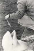 New York (Squatting Man Feeding Beluga Whale), 1963, 11 x 14 Silver Gelatin Photograph