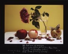 The Last Rose of Summer, September 11, 2005, 11 x 14 C-Print, Ed. 25