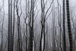 A Season of Litanies Series: Forest of Grey, 2013