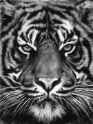 Untitled (Tiger Head, No. 8), 2012.