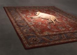 Tragedy, 2012.Persian rug, dog. Performance still, 2012.
