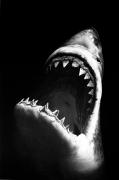 Untitled (Shark 7), 2008.